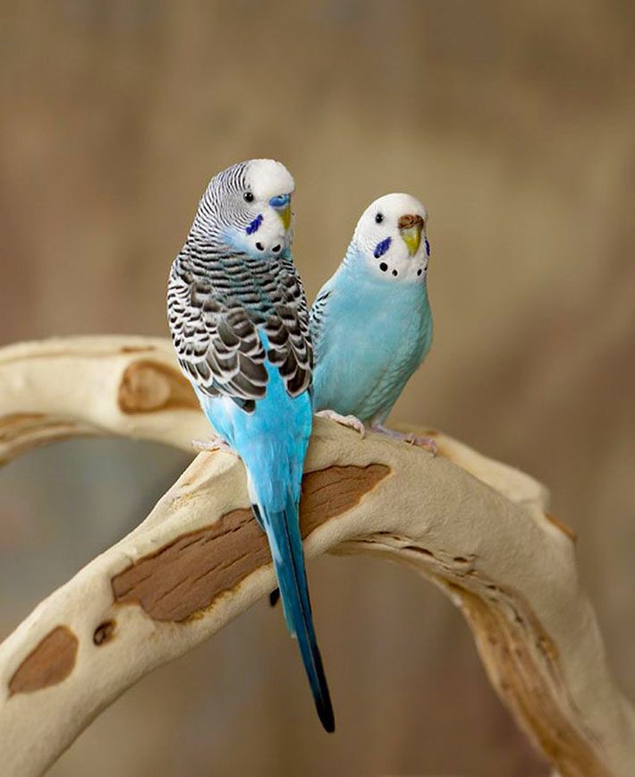 Caring for your Bird