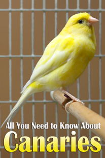 All You Need to Know About Canaries
