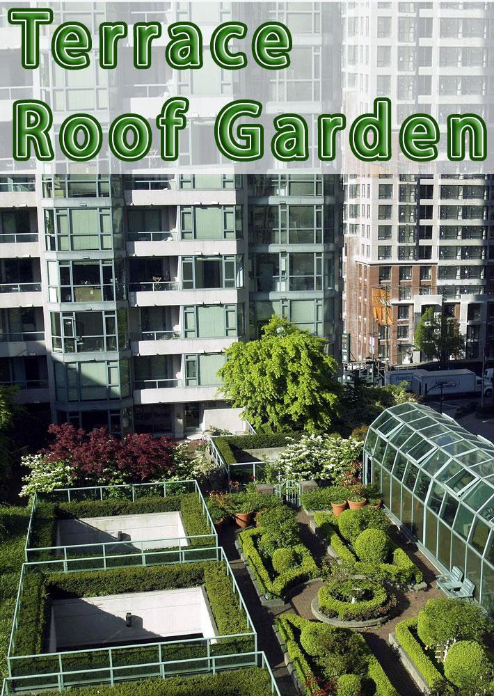 Terrace – Roof Garden