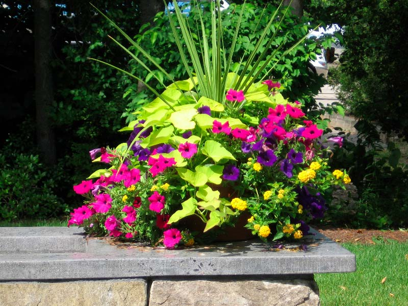 Quiet Corner Container Gardening Ideas: Quiet Corner:Container Gardening Ideas