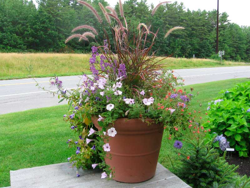 Container gardening ideas quiet corner for Container garden ideas