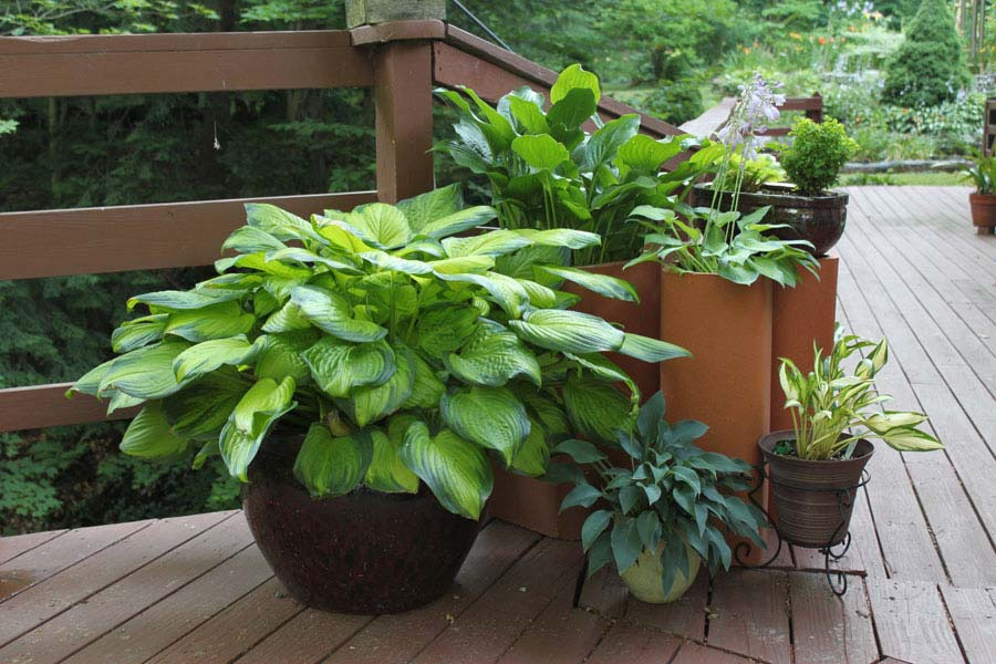 Container gardening ideas quiet corner - Container gardening ...
