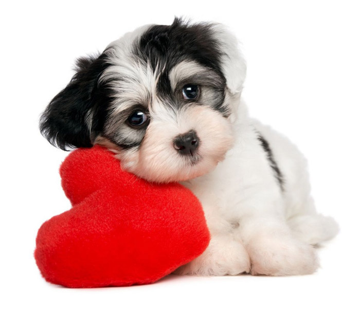 Five Signs Your Dog Loves You