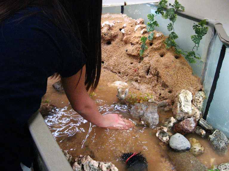 How to Care Fiddler Crabs
