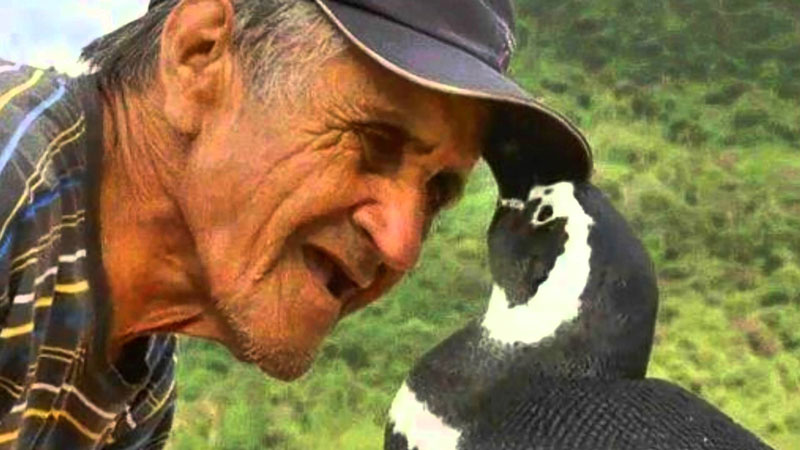 Penguin-Always-Comes-Home-To-The-Man-Who-Saved-His-Life-1
