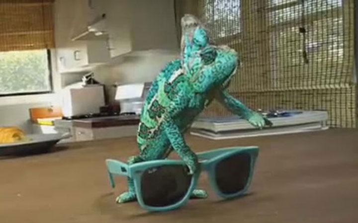 Chameleon – Super Camouflaging