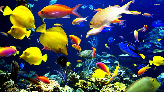 Thinking Of Keeping Tropical Fish?