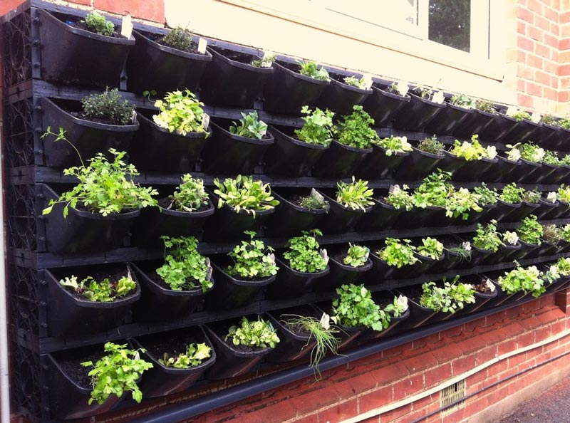 Vertical-Vegetable-Garden-ideas-2