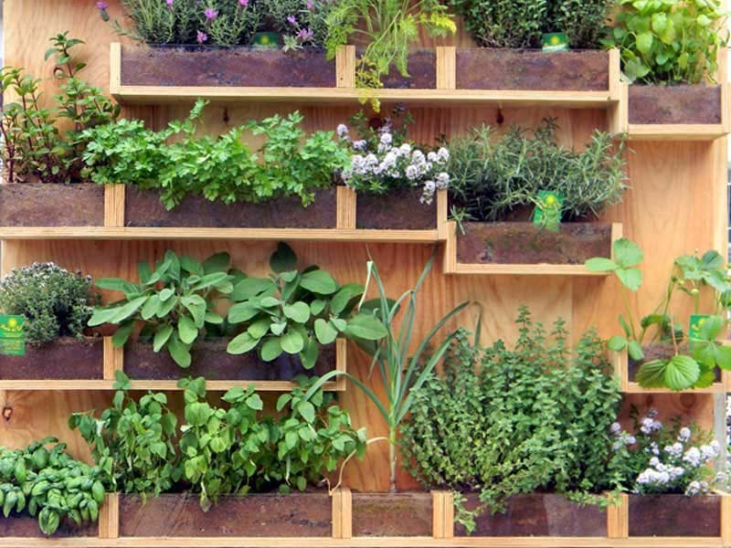 Vertical Vegetable Gardening Ideas vertical vegetable garden ideas 14 Vertical Vegetable Garden Ideas Quiet Corner Within Vertical Vegetable Gardening Source The