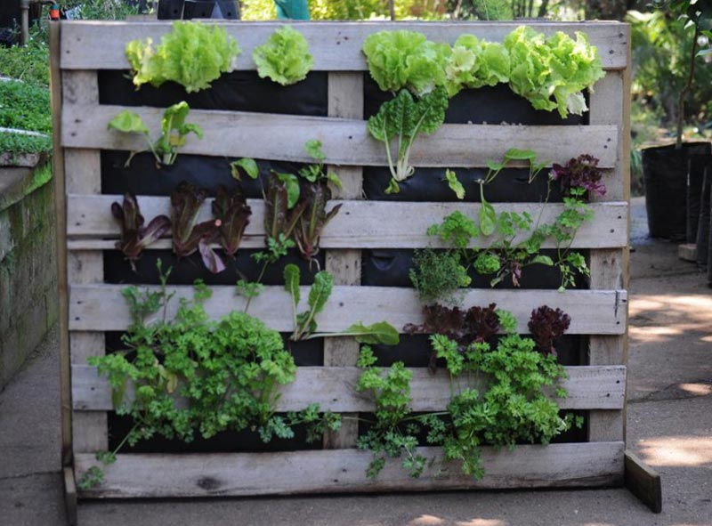 Vertical Vegetable Gardens The Image
