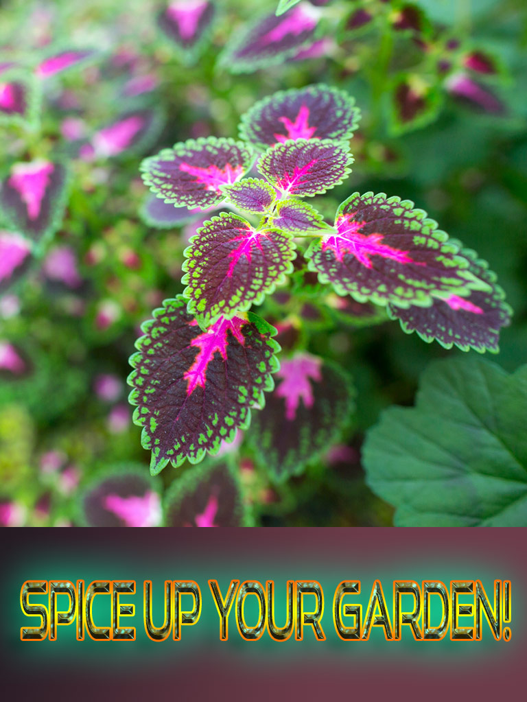 Spice Up Your Garden