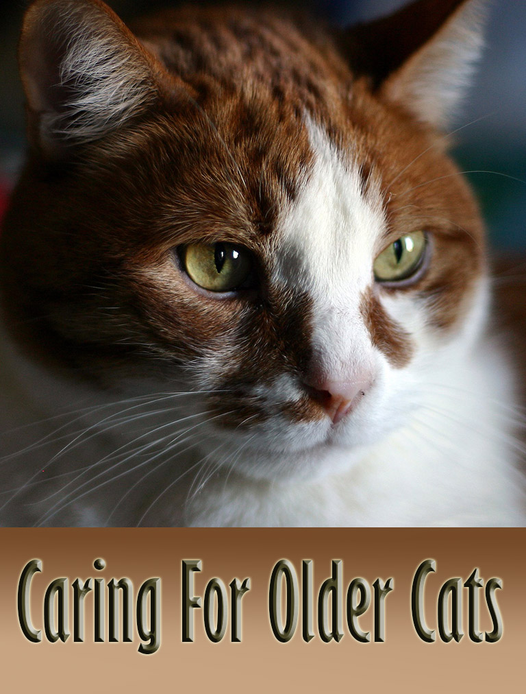 caring for older cats   quiet corner