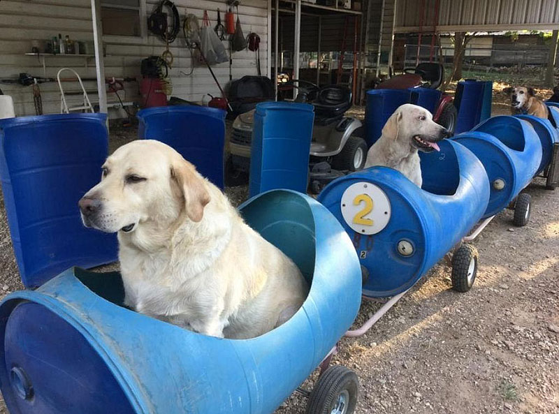 Dog Train Taking Dogs On Adventures