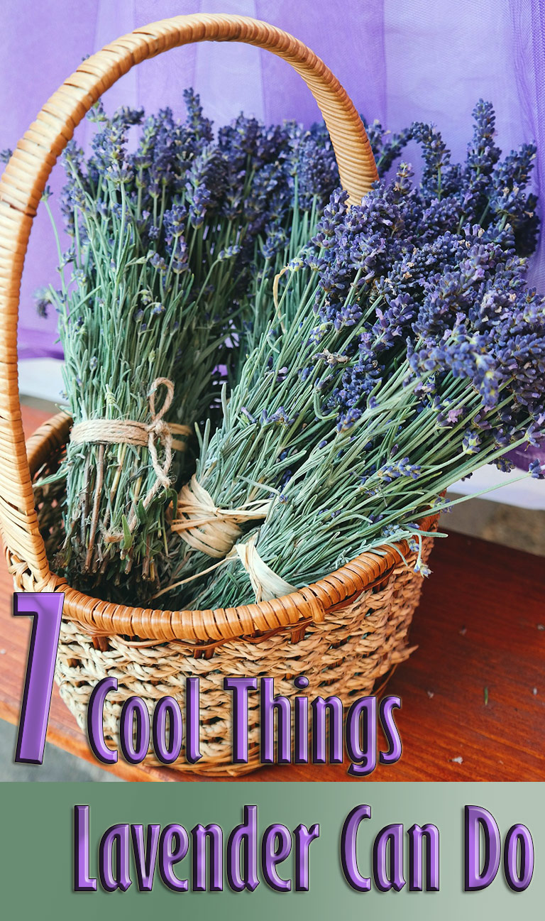7 Cool Things Lavender Can Do