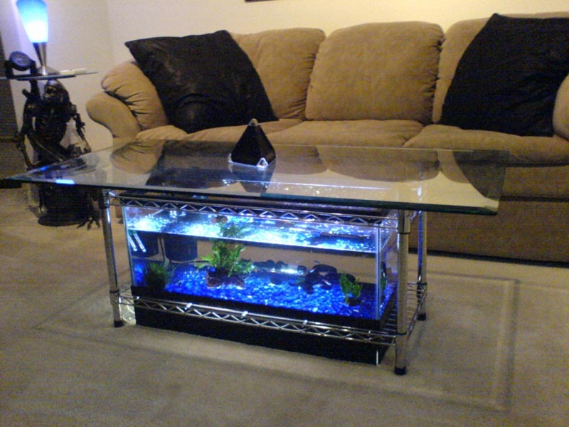 Beautiful Coffee Table Aquariums (12)