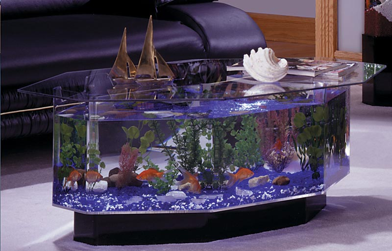 Beautiful Coffee Table Aquariums Quiet Corner