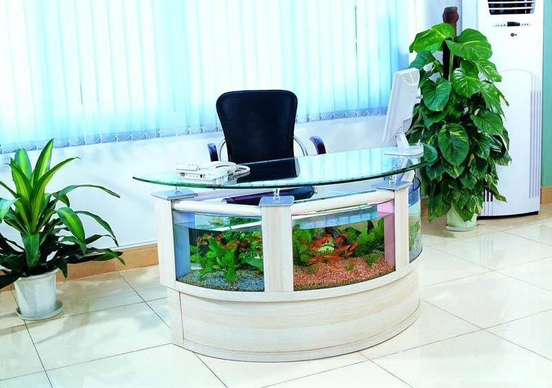 Beautiful Coffee Table Aquariums (18)