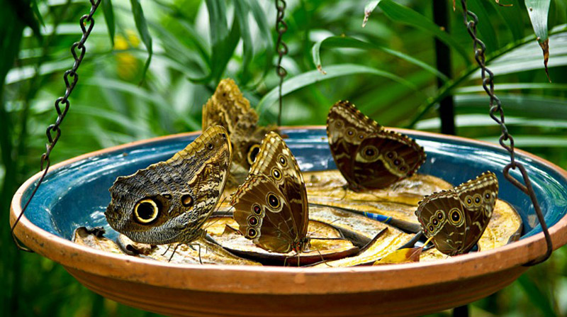 Butterfly Feeder in Garden