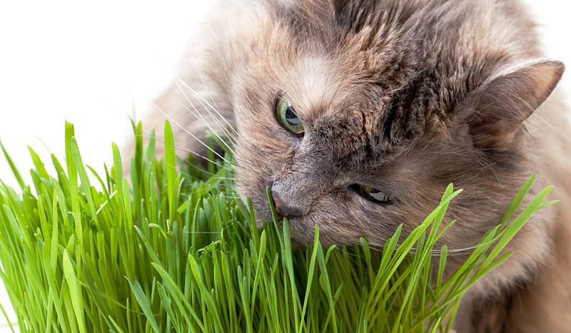 The Top 5 Products Every Indoor Cat Needs