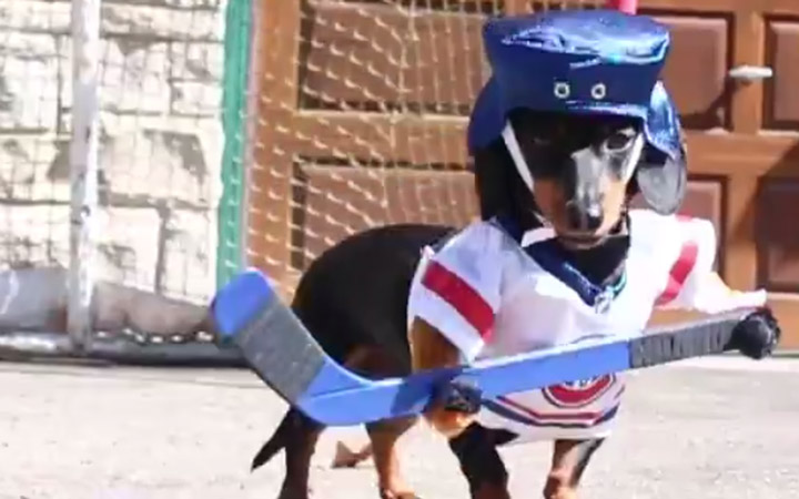 Crusoe & Oakley Dachshund Play Ball Hockey