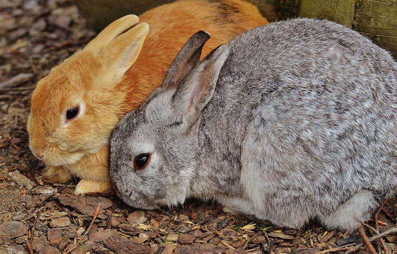 Different Methods Of Rabbit Communication