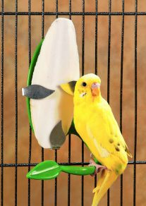 Does My Bird Really Need A Cuttlebone 2
