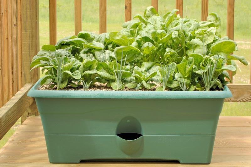 indoor winter gardening tips quiet corner