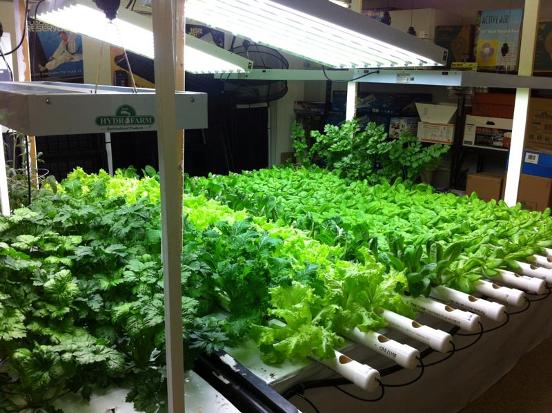 Indoor winter gardening tips quiet corner for Indoor vegetable gardening tips
