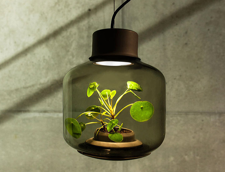 Terrarium Lamps by Nui Studio