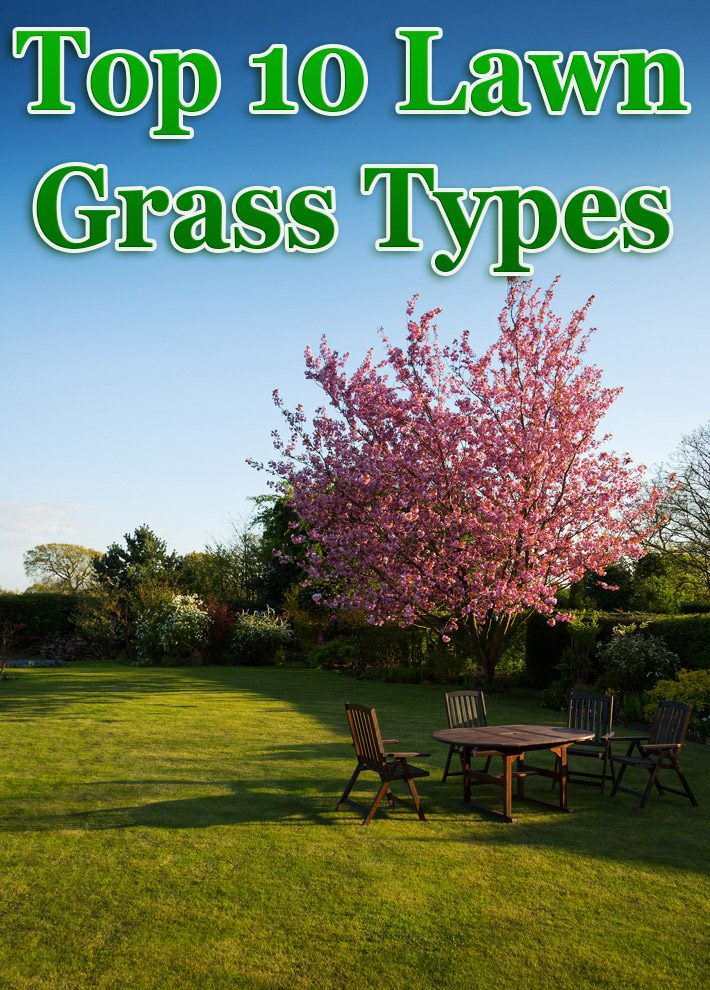 Top 10 Lawn Grass Types