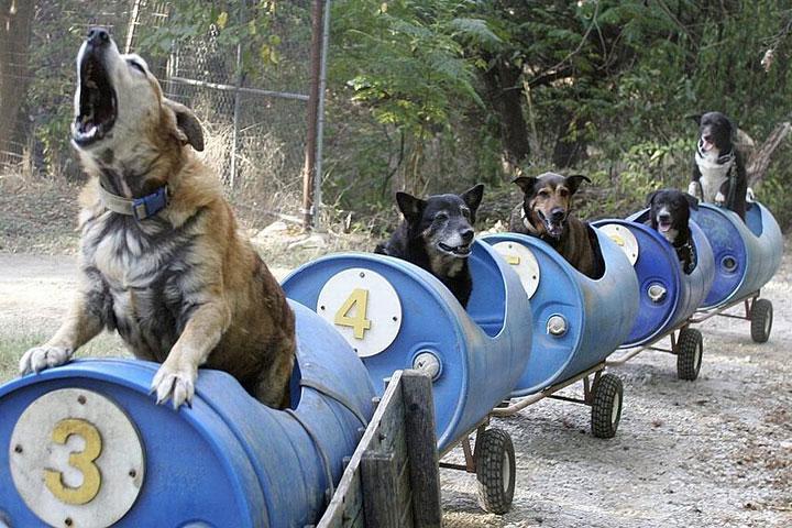 Dog Train Taking Dogs On Adventures Quiet Corner