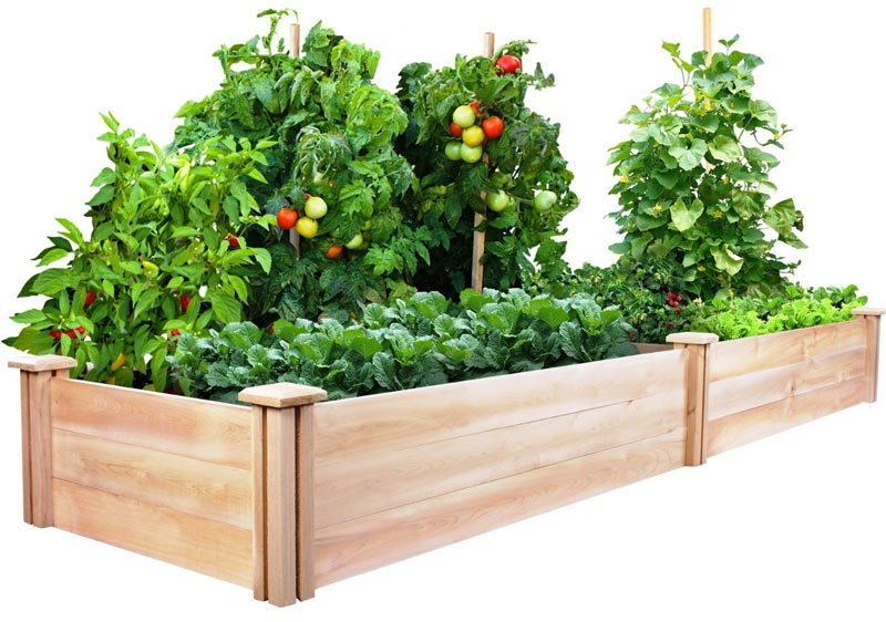 Vegetable Gardening with Raised Beds (15)