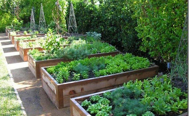 Vegetable gardening with raised beds quiet corner for Vegetable garden