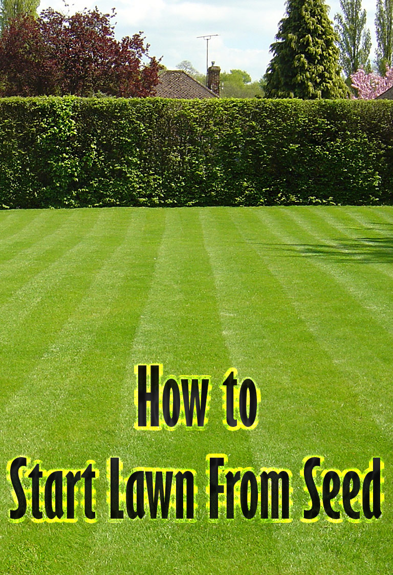 how to start lawn from seed quiet corner