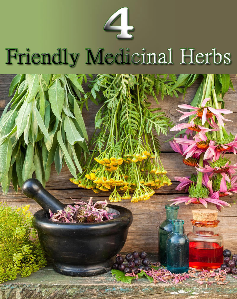 4 Friendly Medicinal Herbs for Your Garden