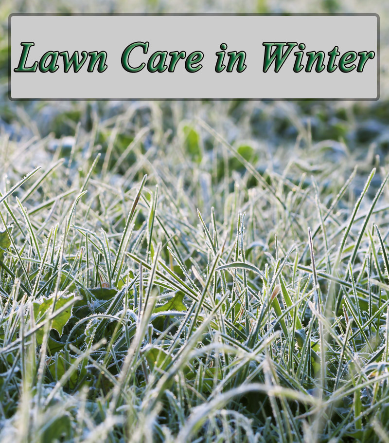 Winter lawn care winter lawn maintenance quiet corner for Winter garden maintenance