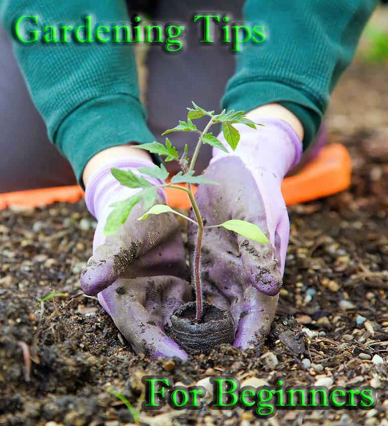 Gardening tips for beginners quiet corner - Gardening tips for beginners ...