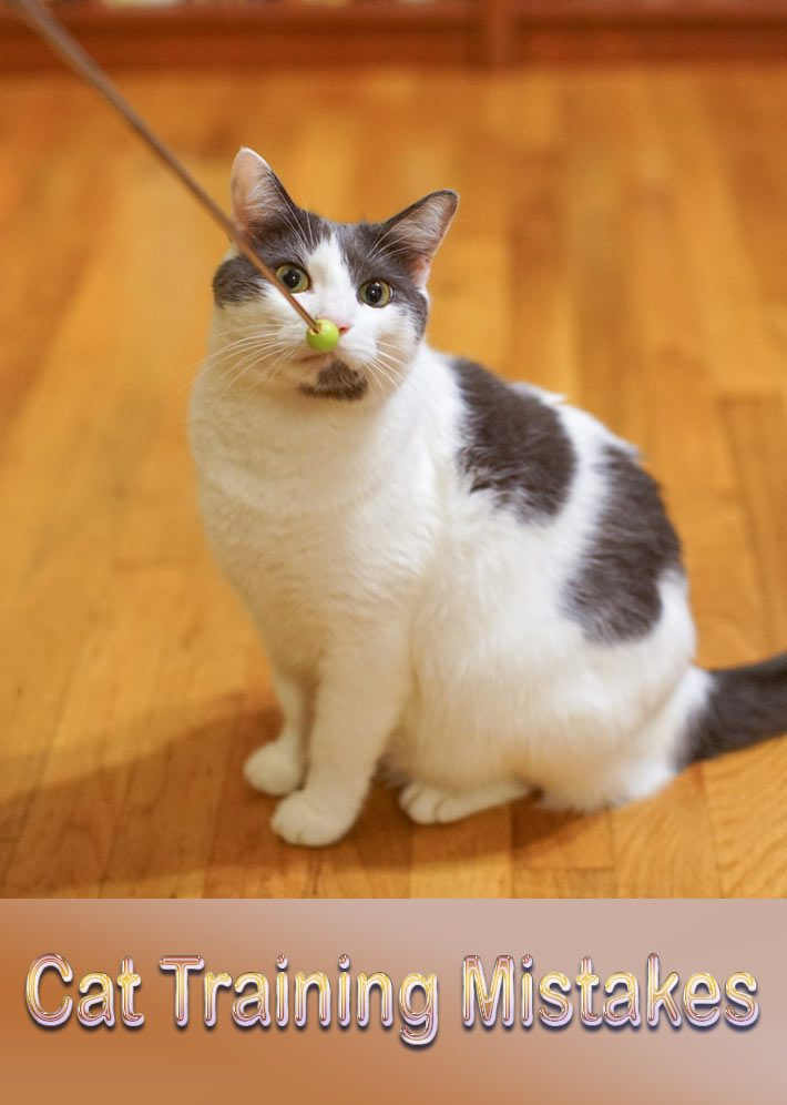Cat Training Mistakes