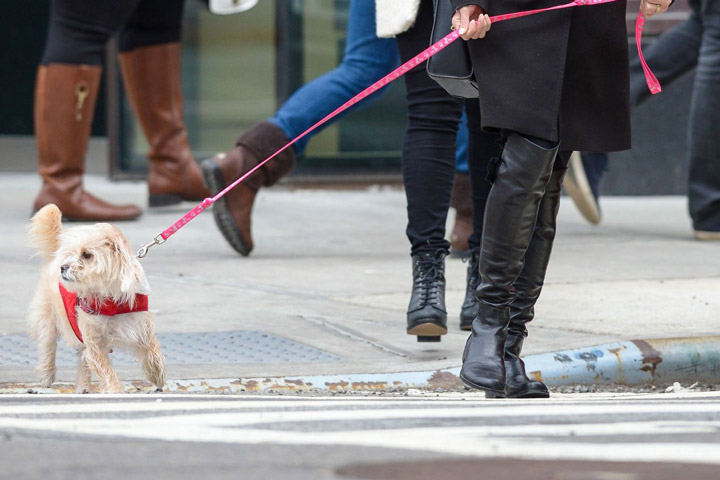 How To Safely Walk Your Dog In The Big City - Quiet Corner