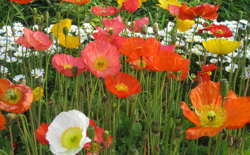 How to Create a Wildflower Garden