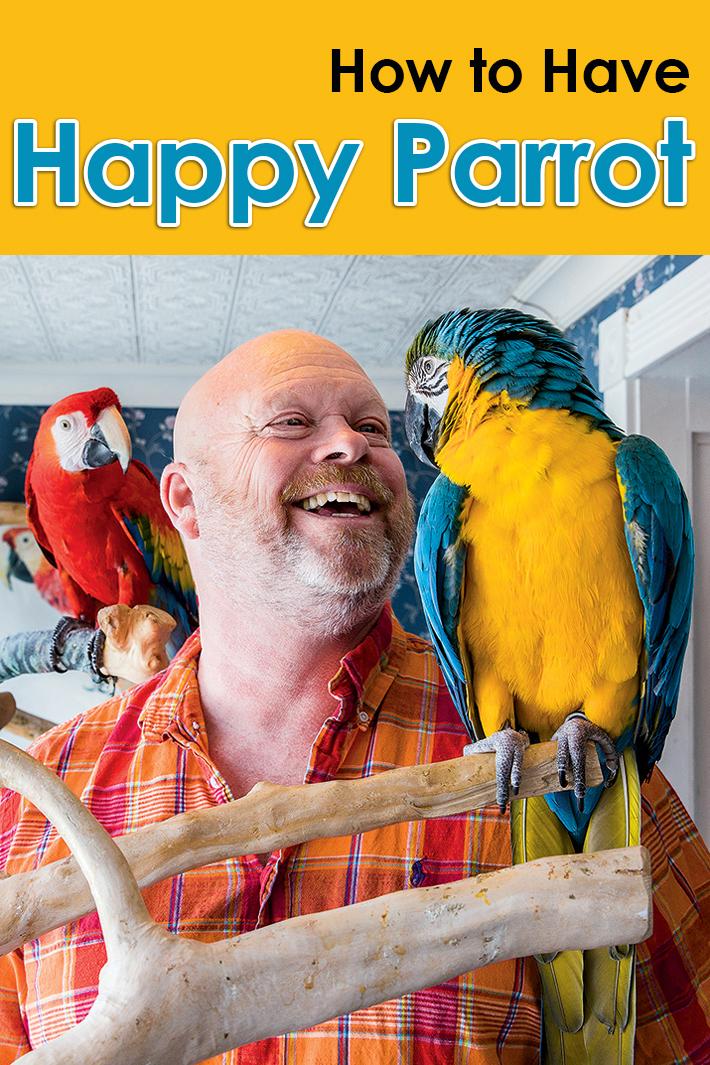 How to Have Happy Parrot - Quiet Corner