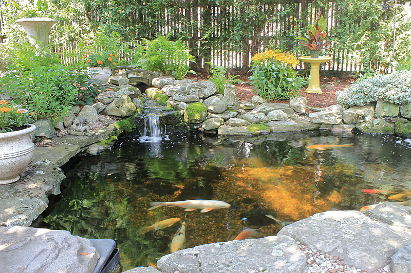 Inspiring backyard pond ideas quiet corner for Koi carp pool design