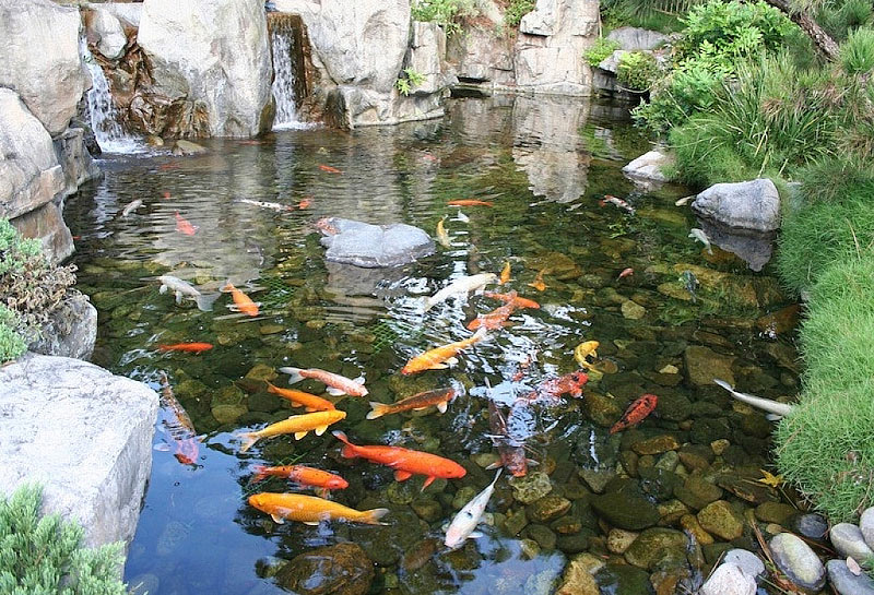 Backyard Ponds Ideas : Inspiring Backyard Pond Ideas  Quiet Corner