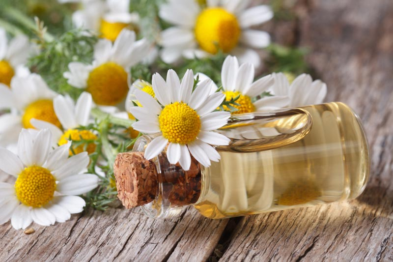 Skincare Benefits of Chamomile