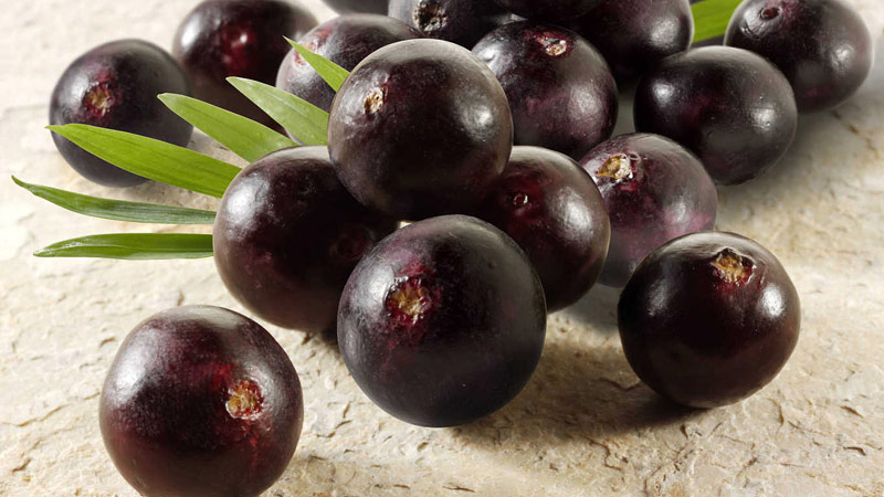 Acai Berry - Superfood - Quiet Corner