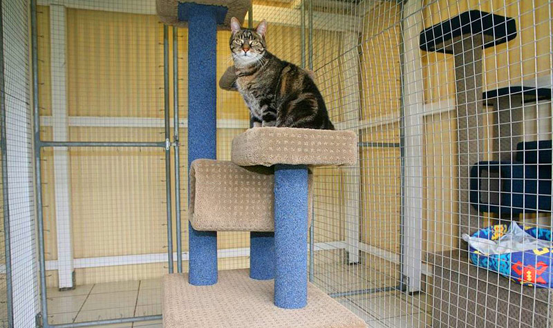 Arrange the Best Cat Accommodation for Your Kitty
