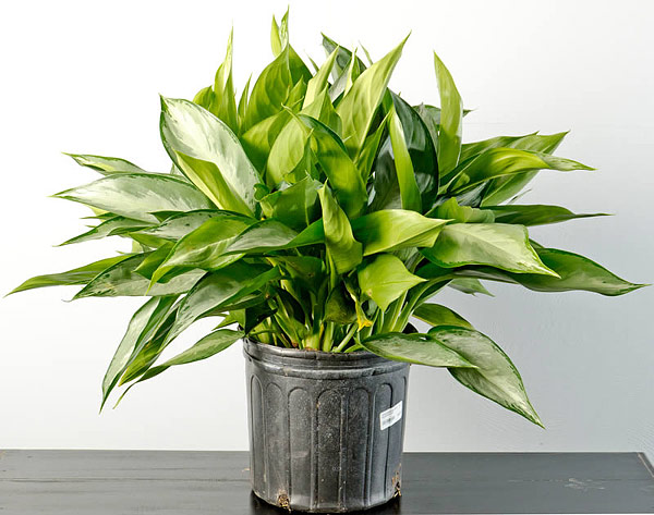 5 Best Plants for Green Bathroom