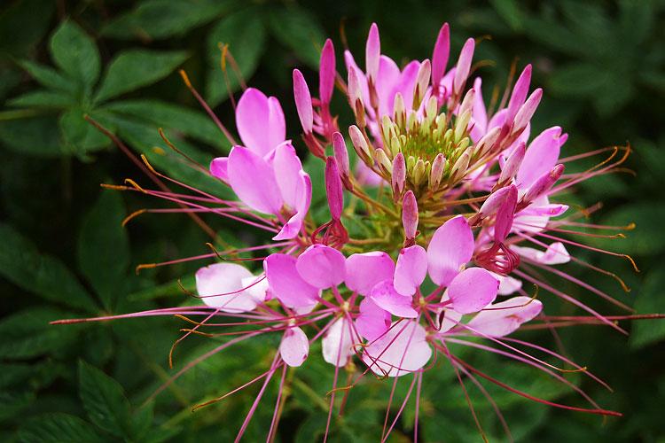 15 Deer-Resistant Plants