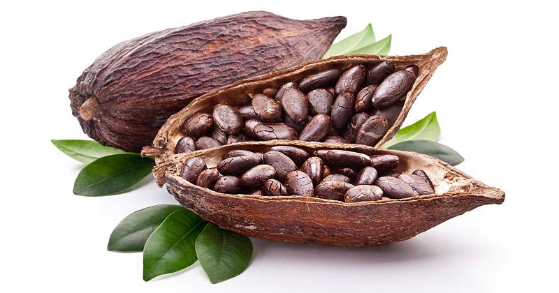Cacao - Super Food Full of Antioxidants