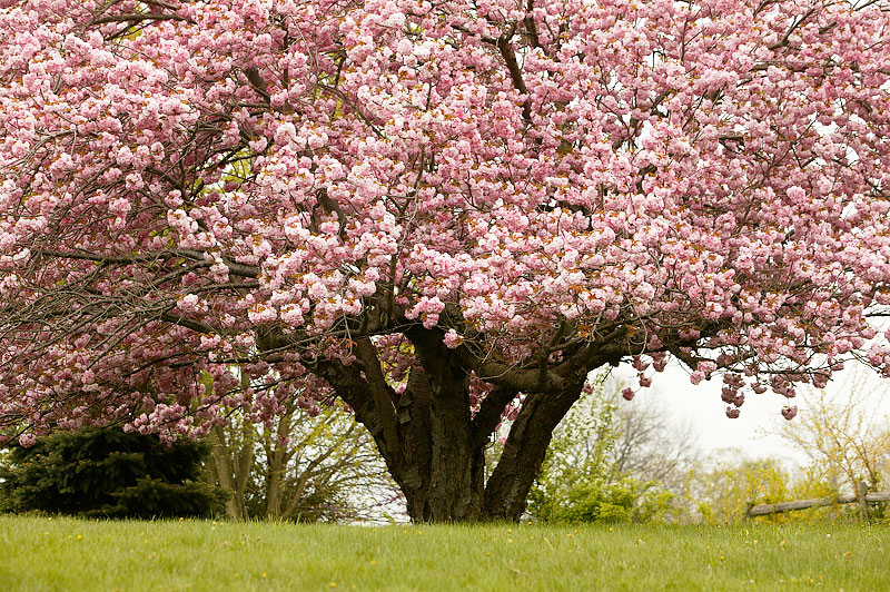 Tree Roots: Facts and Protection Tips